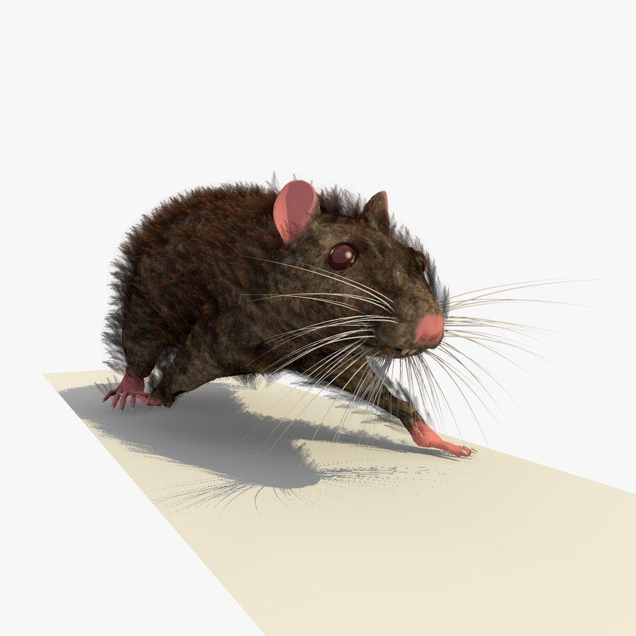 쥐 / 마우스 브라운 걷는 포즈 royalty-free 3d model - Preview no. 6