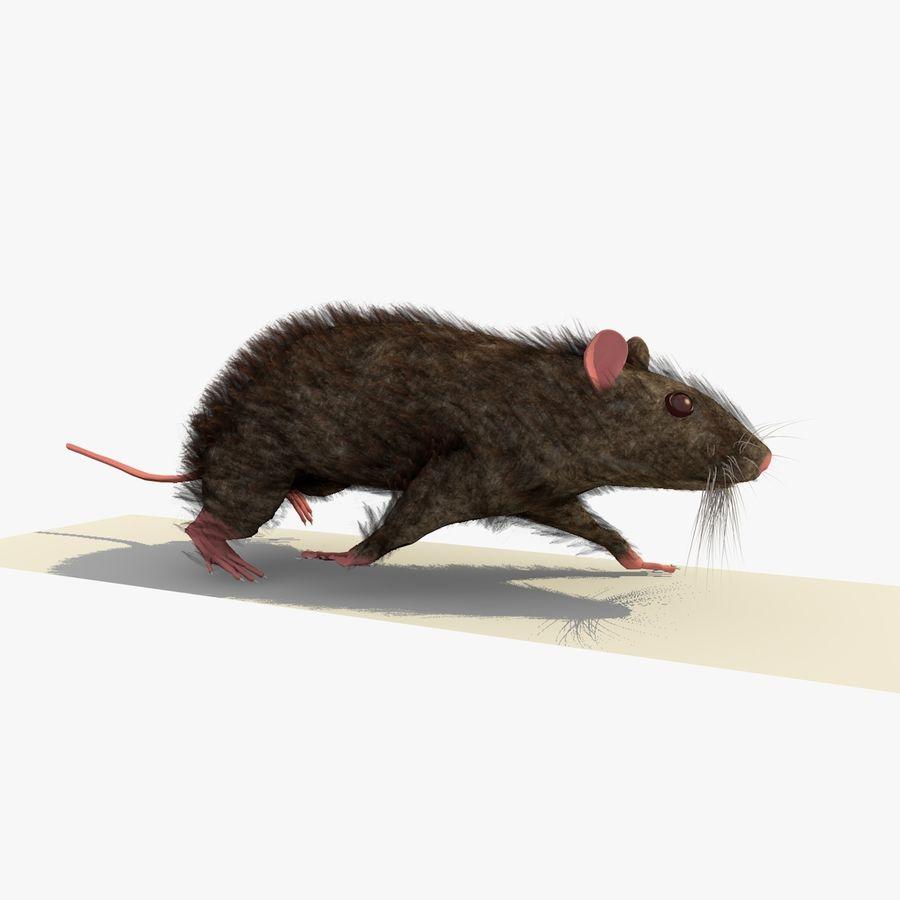 쥐 / 마우스 브라운 걷는 포즈 royalty-free 3d model - Preview no. 1