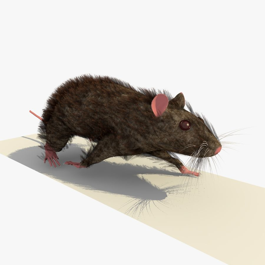 쥐 / 마우스 브라운 걷는 포즈 royalty-free 3d model - Preview no. 4