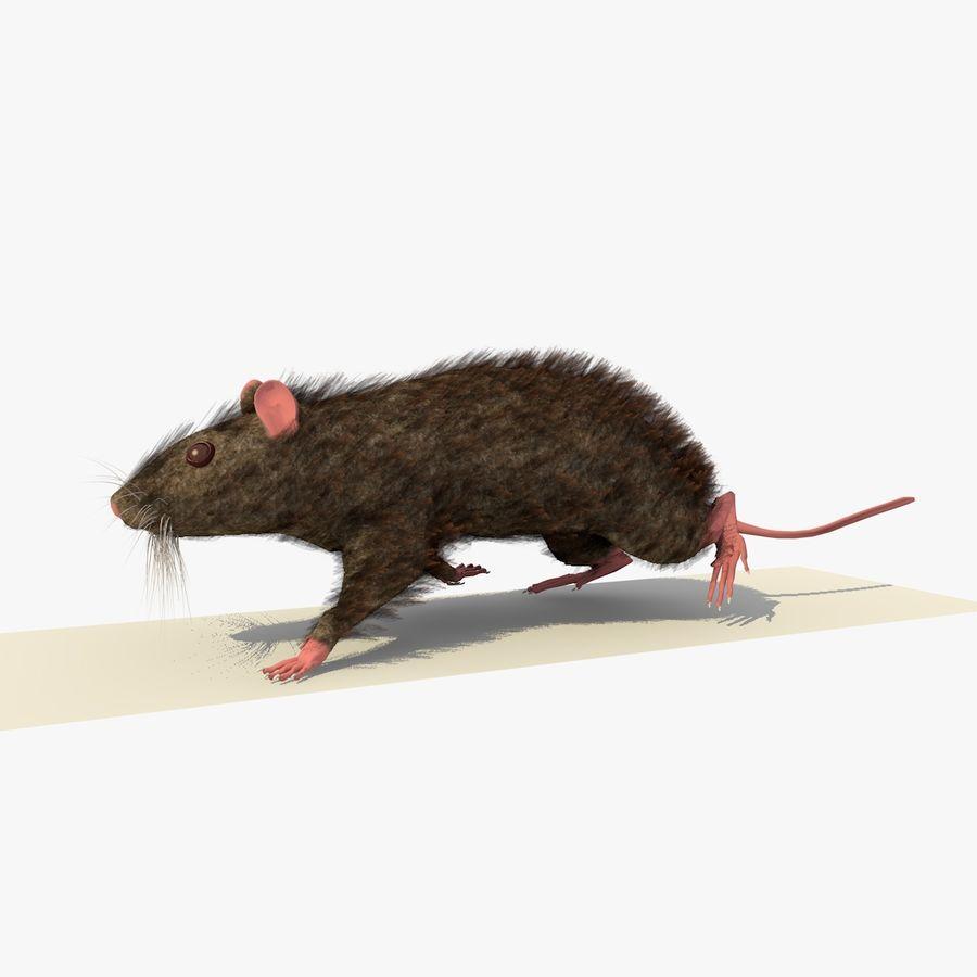 쥐 / 마우스 브라운 걷는 포즈 royalty-free 3d model - Preview no. 2