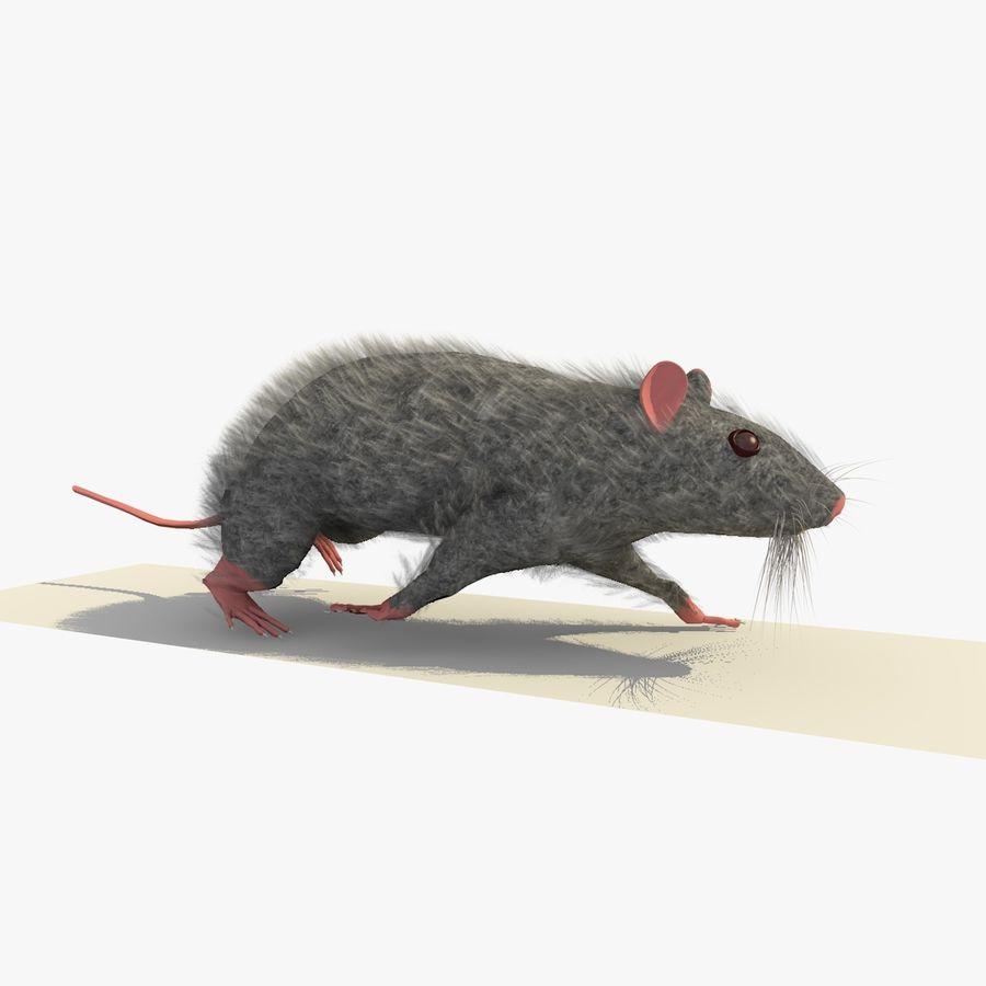 Крыса / Мышь Серый Ходьба Поза royalty-free 3d model - Preview no. 1
