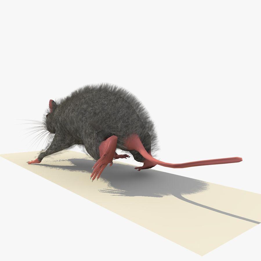 Крыса / Мышь Серый Ходьба Поза royalty-free 3d model - Preview no. 4