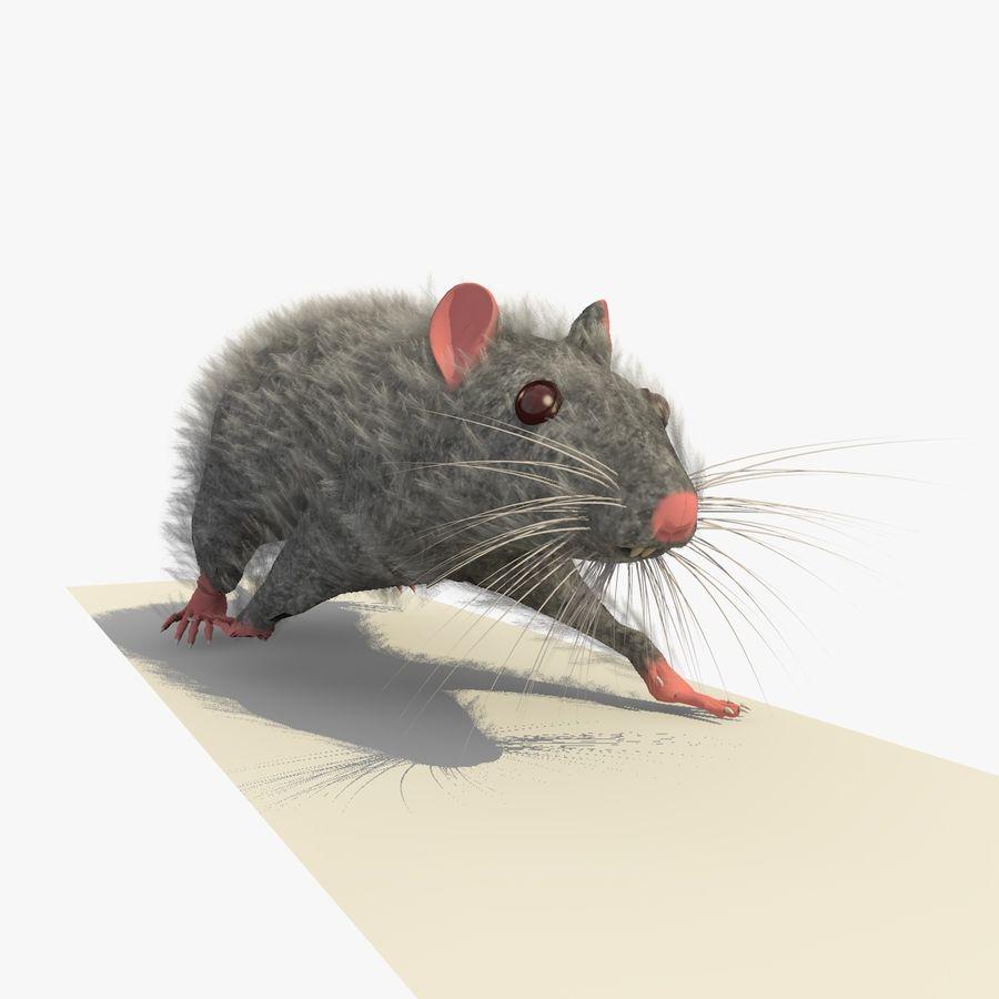 Крыса / Мышь Серый Ходьба Поза royalty-free 3d model - Preview no. 7