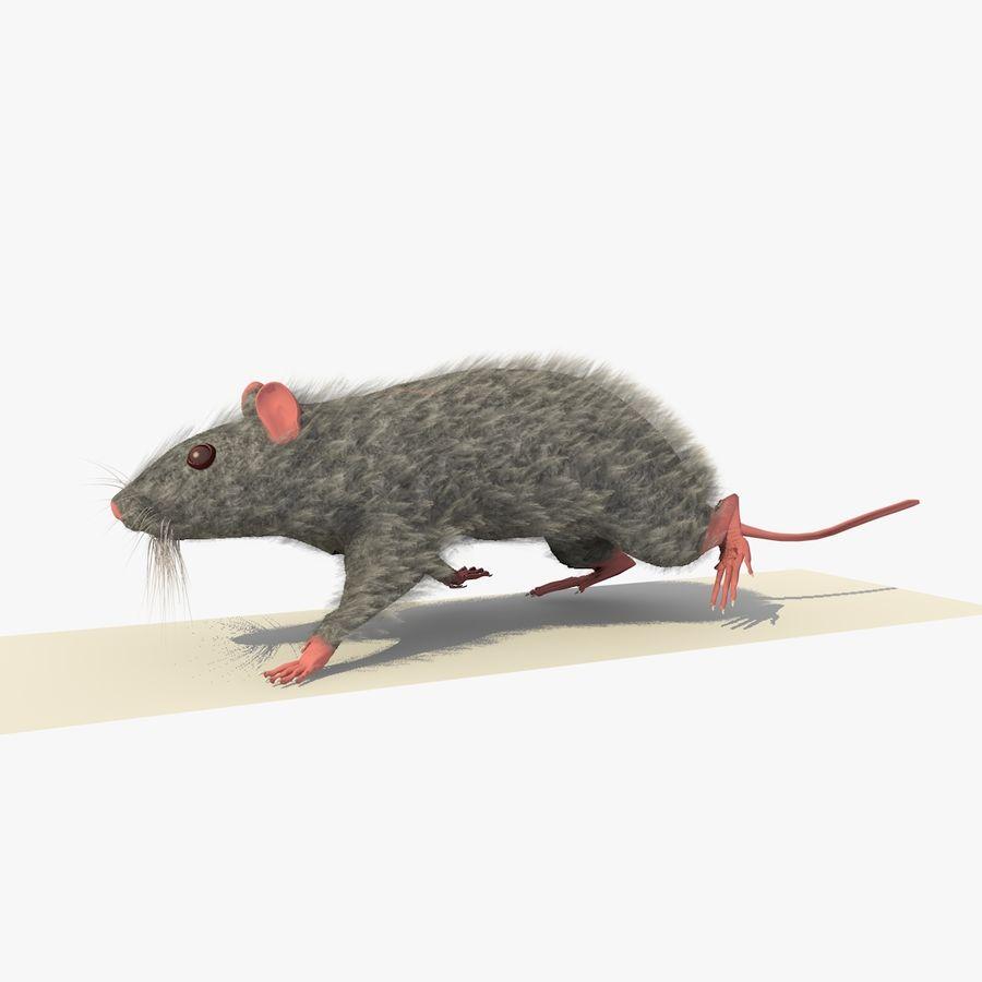 Крыса / Мышь Серый Ходьба Поза royalty-free 3d model - Preview no. 2