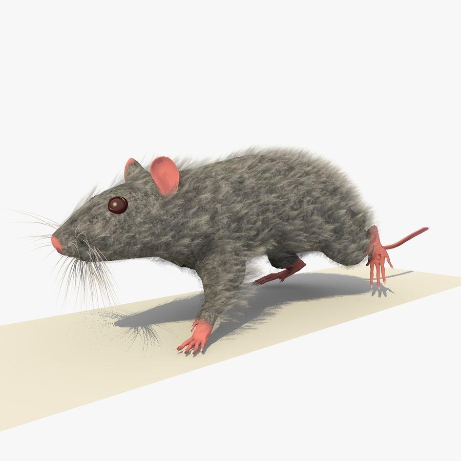 Крыса / Мышь Серый Ходьба Поза royalty-free 3d model - Preview no. 3