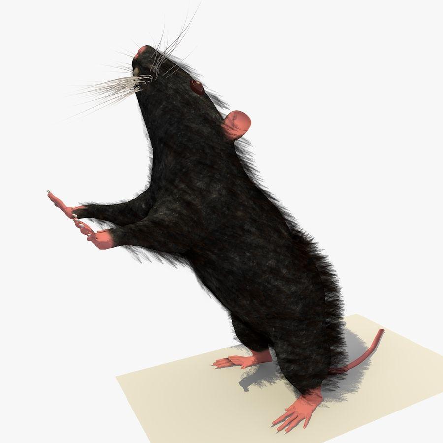 Крыса / мышь черная поза 1 royalty-free 3d model - Preview no. 1