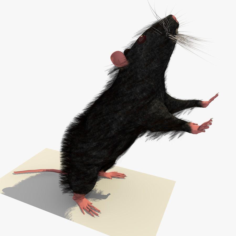 Крыса / мышь черная поза 1 royalty-free 3d model - Preview no. 4