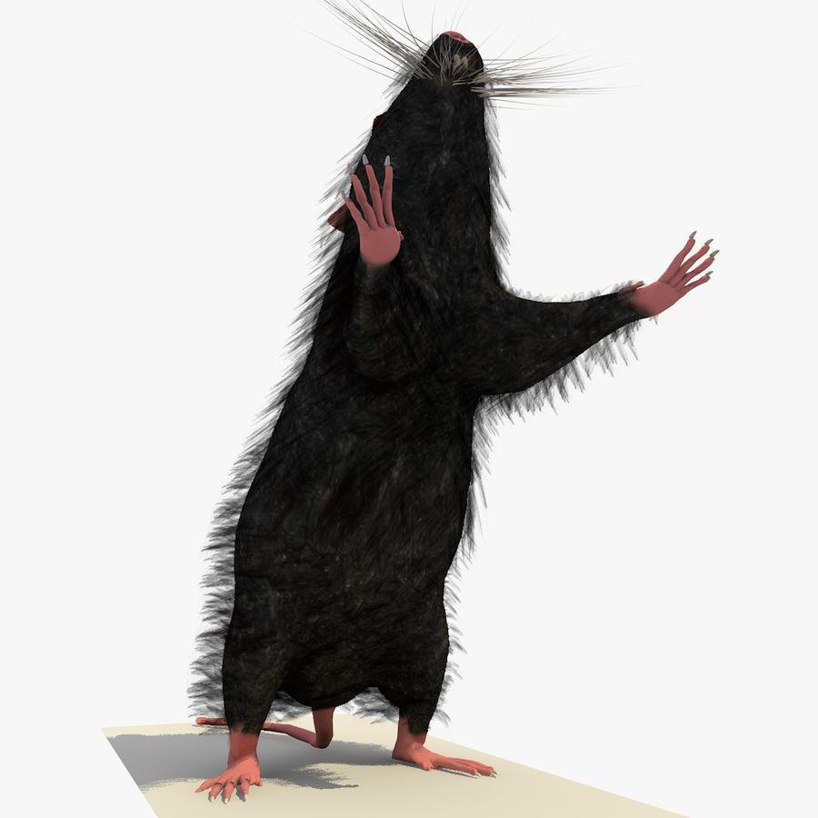 Крыса / мышь черная поза 1 royalty-free 3d model - Preview no. 6