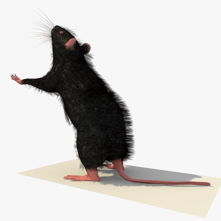 Крыса / мышь черная поза 1 royalty-free 3d model - Preview no. 2