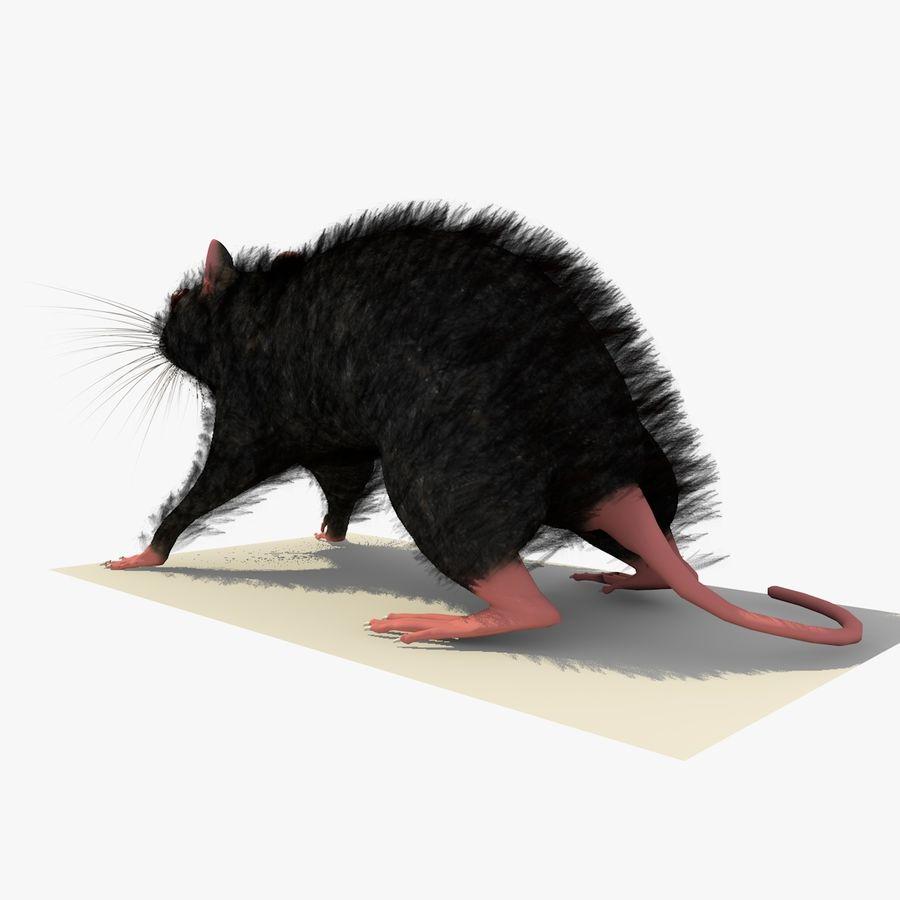 쥐 / 마우스 블랙 스탠딩 포즈 2 royalty-free 3d model - Preview no. 3