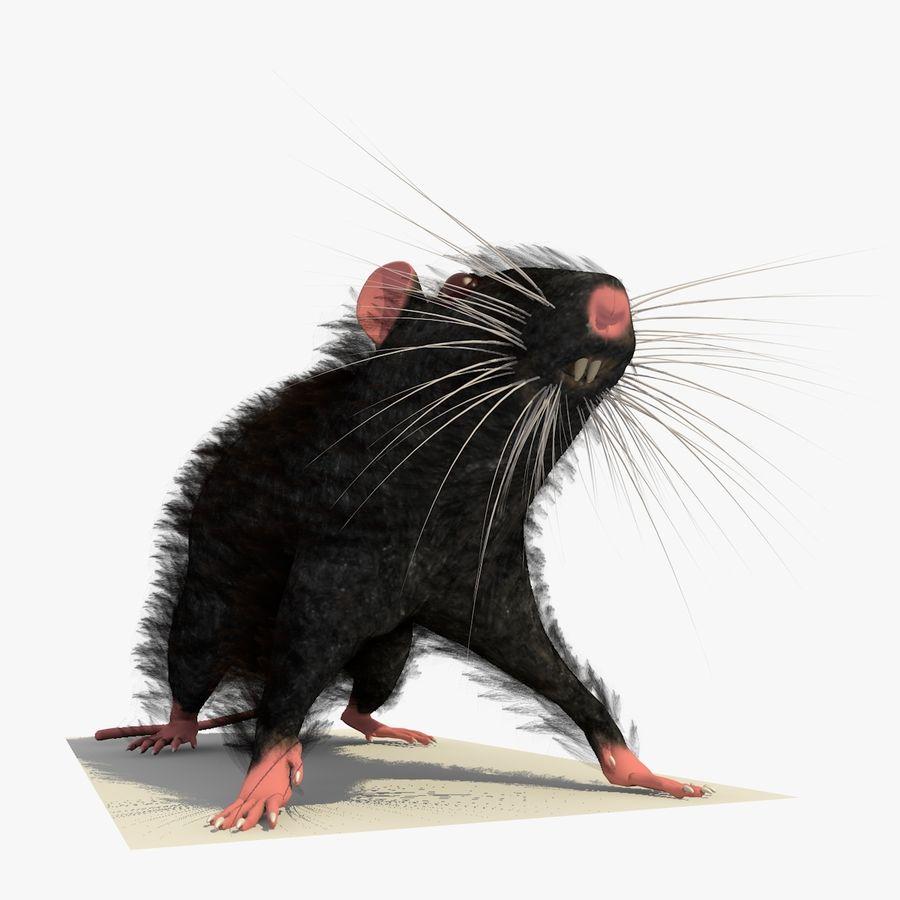 쥐 / 마우스 블랙 스탠딩 포즈 2 royalty-free 3d model - Preview no. 5