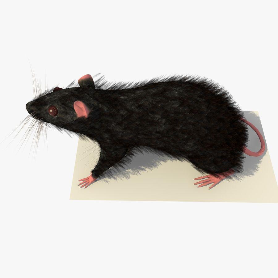 쥐 / 마우스 블랙 스탠딩 포즈 2 royalty-free 3d model - Preview no. 4