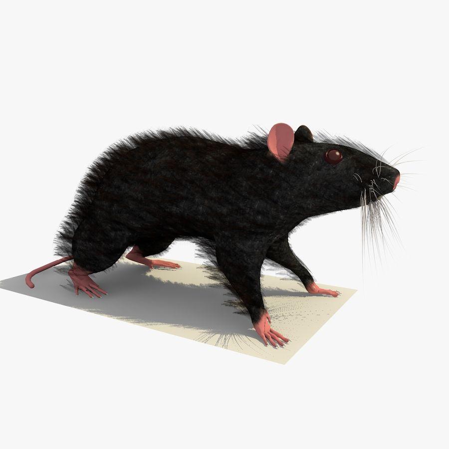 쥐 / 마우스 블랙 스탠딩 포즈 2 royalty-free 3d model - Preview no. 1