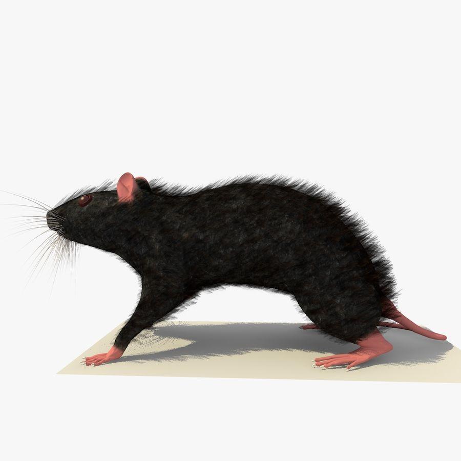 쥐 / 마우스 블랙 스탠딩 포즈 2 royalty-free 3d model - Preview no. 2