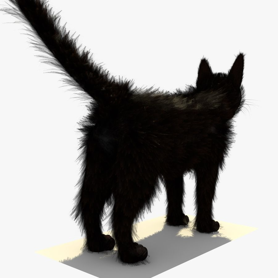 Schwarze Katze mit PELZ royalty-free 3d model - Preview no. 6