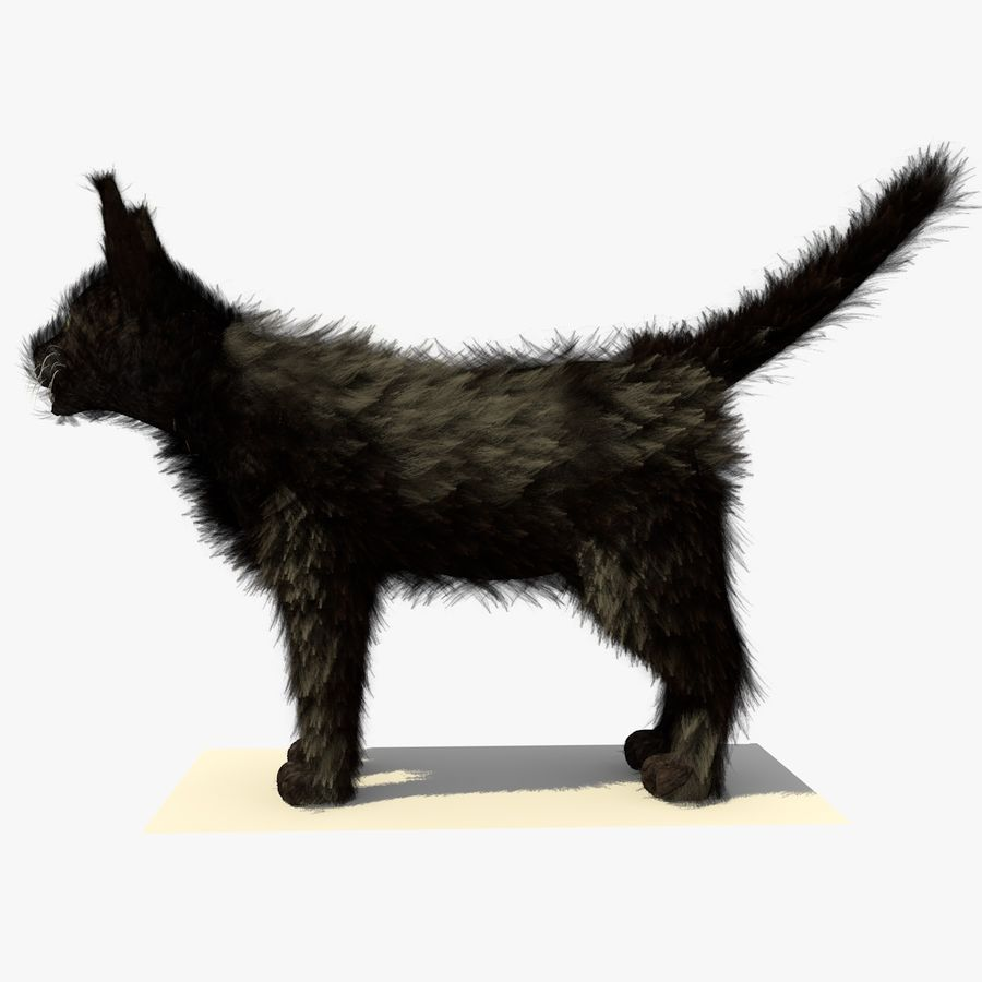 Schwarze Katze mit PELZ royalty-free 3d model - Preview no. 1