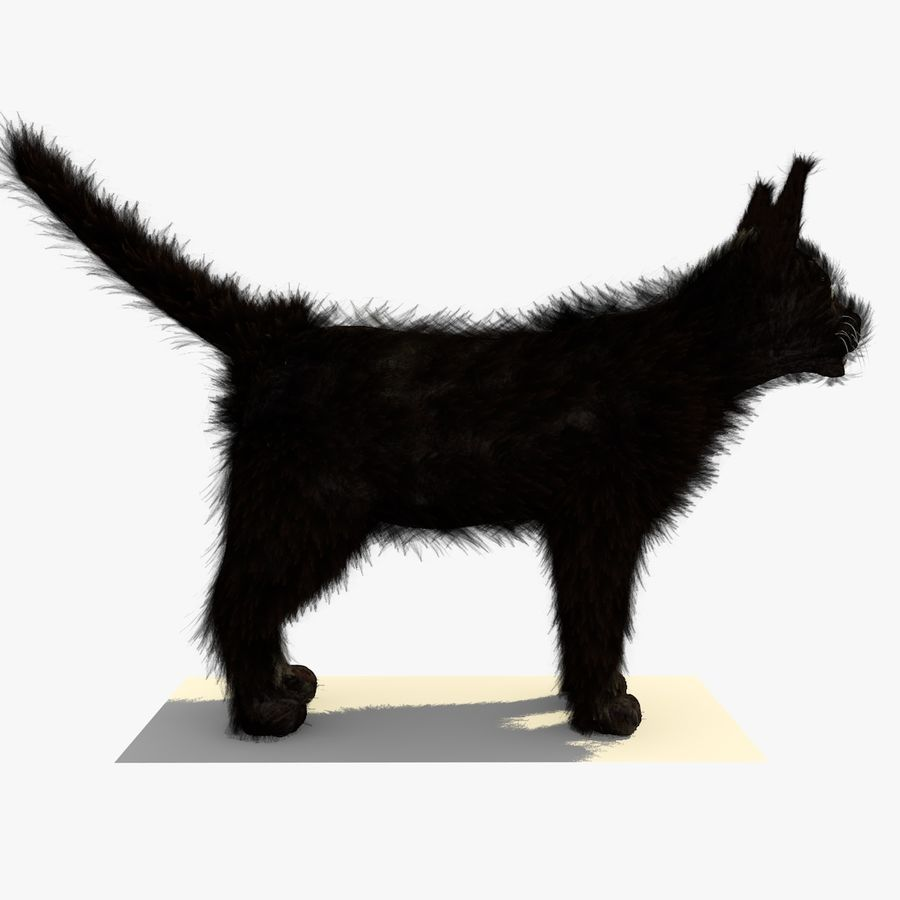 Schwarze Katze mit PELZ royalty-free 3d model - Preview no. 8