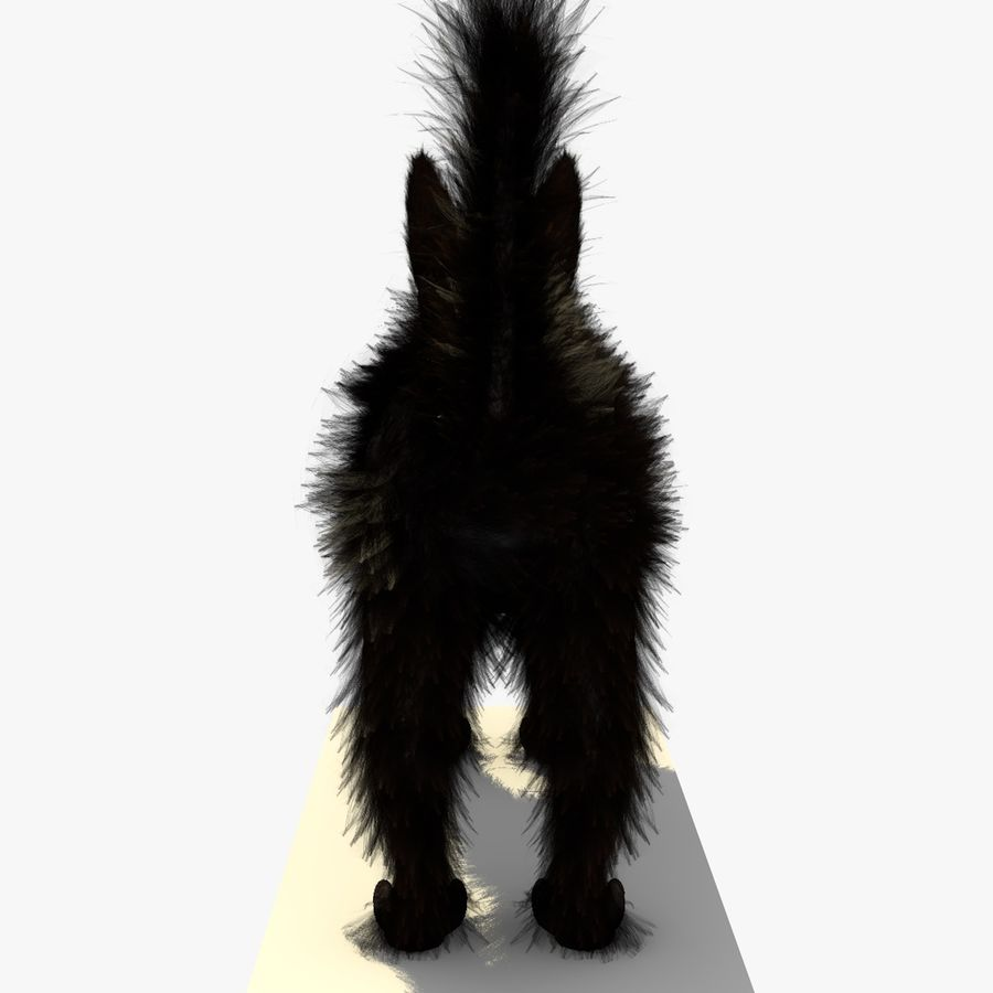 Schwarze Katze mit PELZ royalty-free 3d model - Preview no. 7
