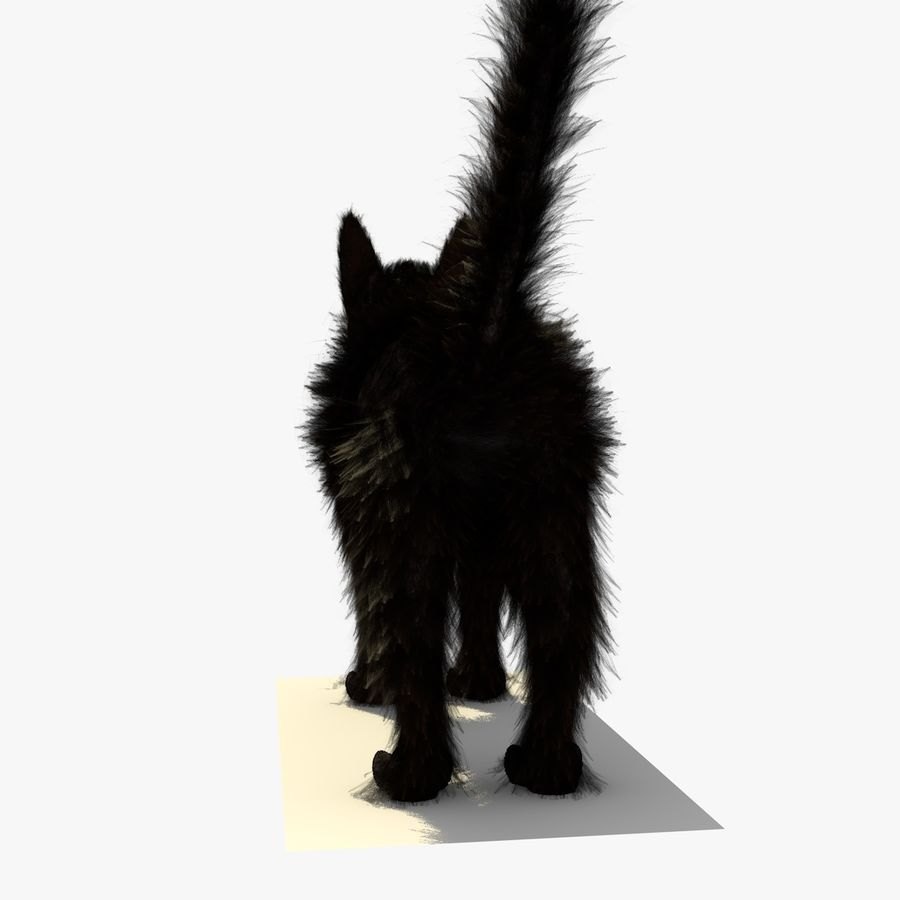 Schwarze Katze mit PELZ royalty-free 3d model - Preview no. 5