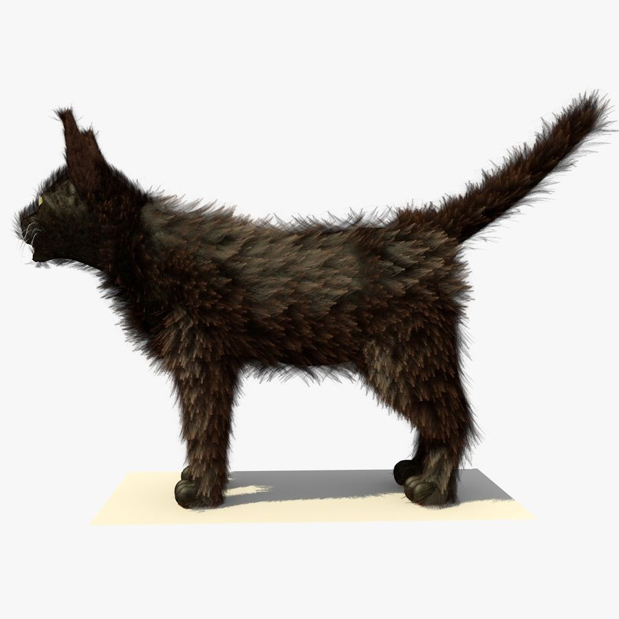Gato marrom de Havana com PELE royalty-free 3d model - Preview no. 1