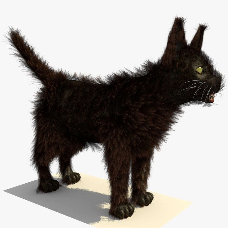 Gato marrom de Havana com PELE royalty-free 3d model - Preview no. 6