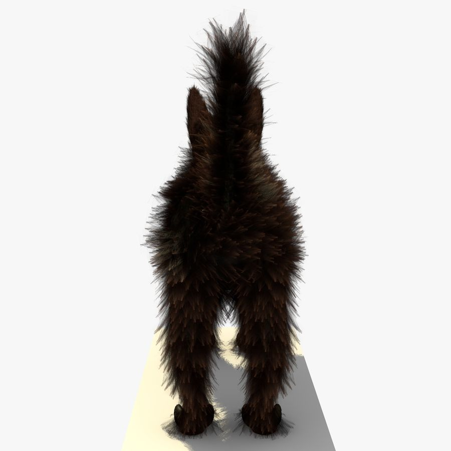 Gato marrom de Havana com PELE royalty-free 3d model - Preview no. 8