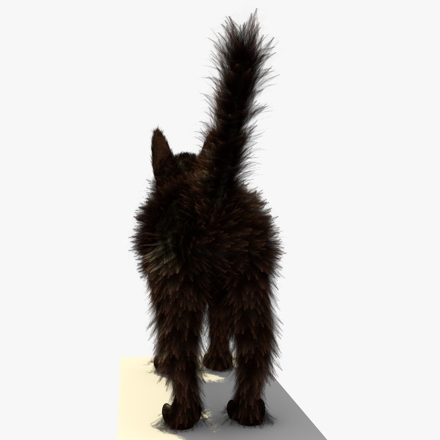 Gato marrom de Havana com PELE royalty-free 3d model - Preview no. 5