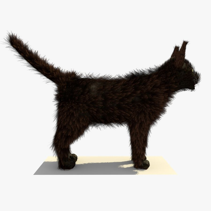 Gato marrom de Havana com PELE royalty-free 3d model - Preview no. 4