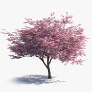 Japanska Sakura 3d model