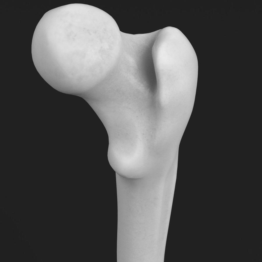 解剖学-人間の大腿骨 royalty-free 3d model - Preview no. 4