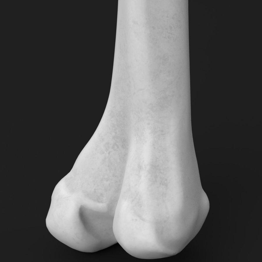 解剖学-人間の大腿骨 royalty-free 3d model - Preview no. 5