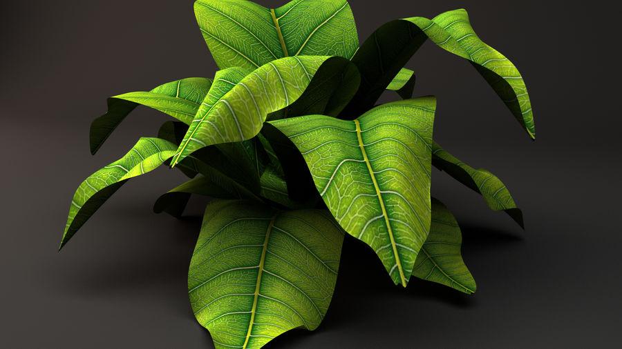 绿叶植物 royalty-free 3d model - Preview no. 1