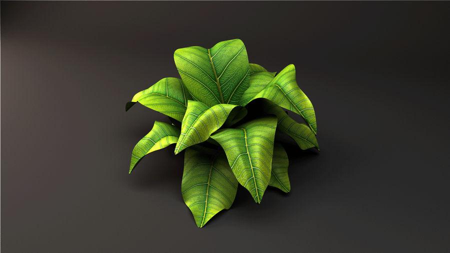 绿叶植物 royalty-free 3d model - Preview no. 3
