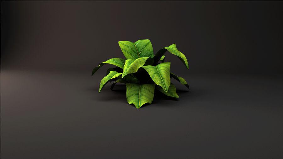 绿叶植物 royalty-free 3d model - Preview no. 2