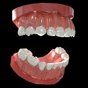 Teeth Primary 3d model