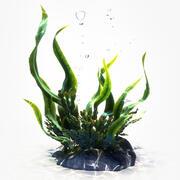 Animación de algas modelo 3d