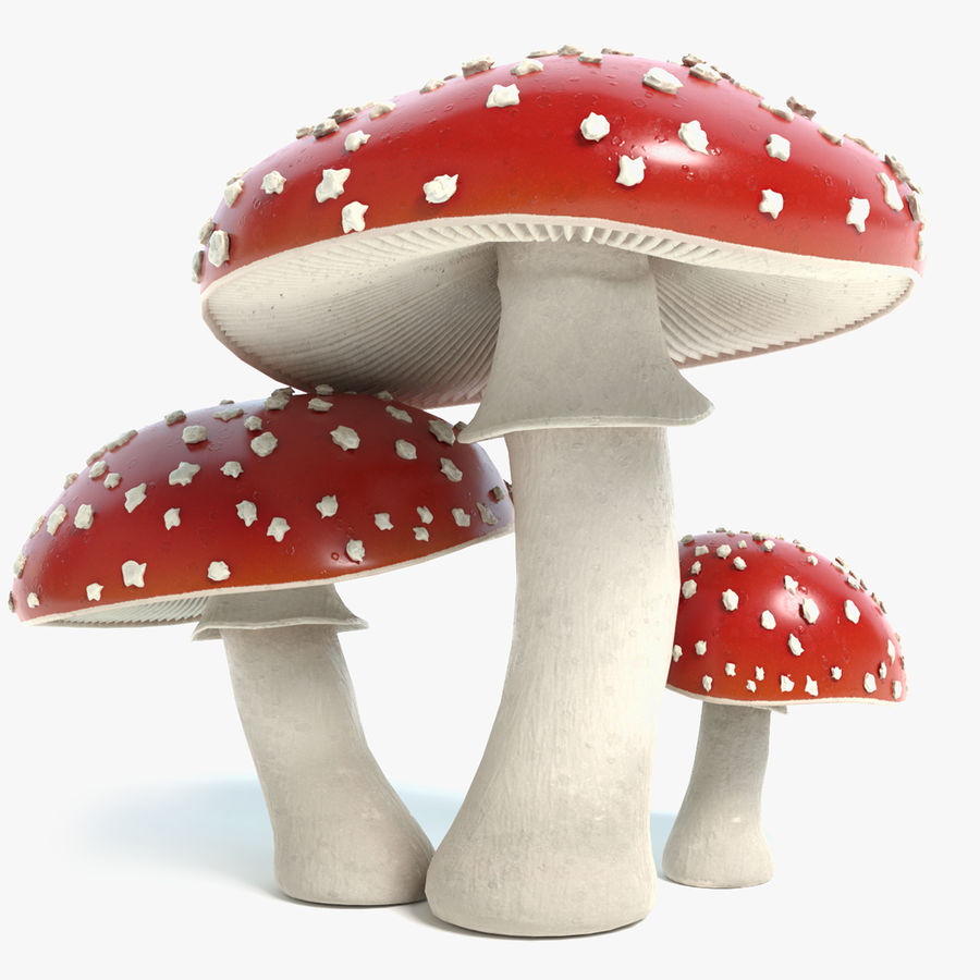 Amanita Mushrooms royalty-free 3d model - Preview no. 1