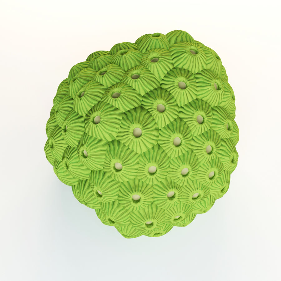 Star coral royalty-free 3d model - Preview no. 3