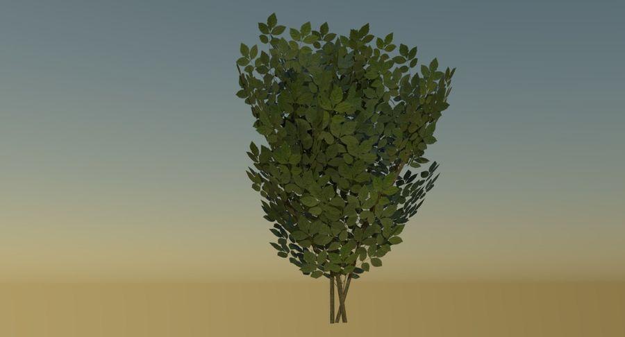 Gra gotowa krzew royalty-free 3d model - Preview no. 4