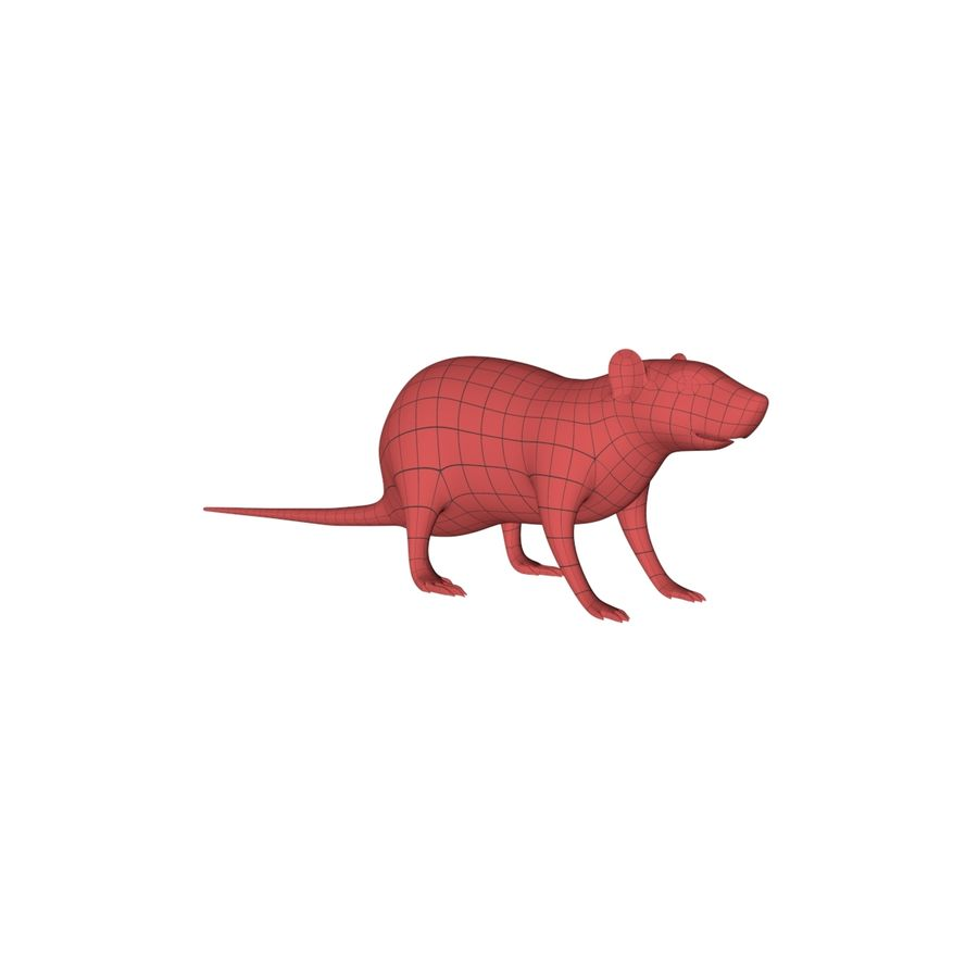 Rat Mouse base mesh royalty-free 3d model - Preview no. 3