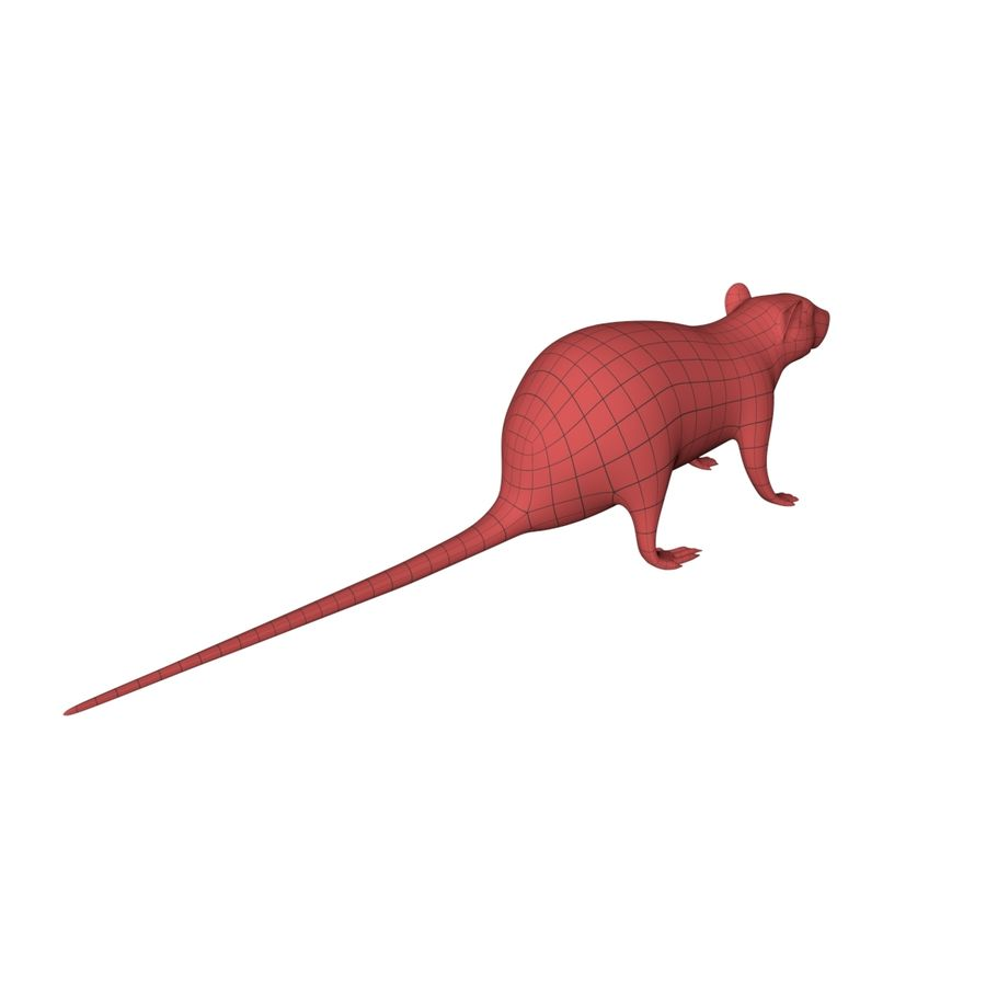 Rat Mouse base mesh royalty-free 3d model - Preview no. 7