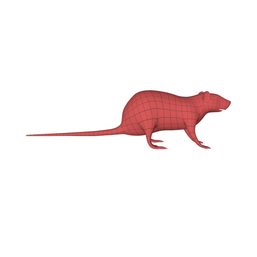 Rat Mouse base mesh royalty-free 3d model - Preview no. 1