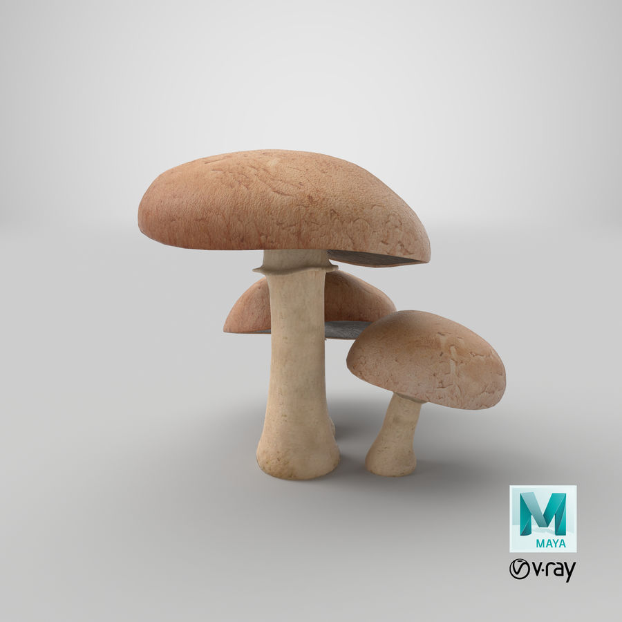 Portobello-Pilze royalty-free 3d model - Preview no. 16
