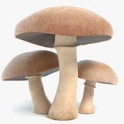 Portobello Mushrooms 3d model