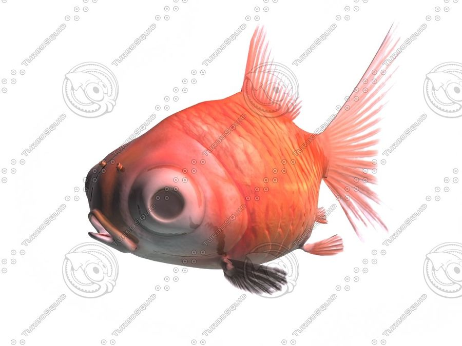 Peixe dourado royalty-free 3d model - Preview no. 1