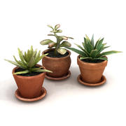 Potted Plants Bundle 2C 3d model