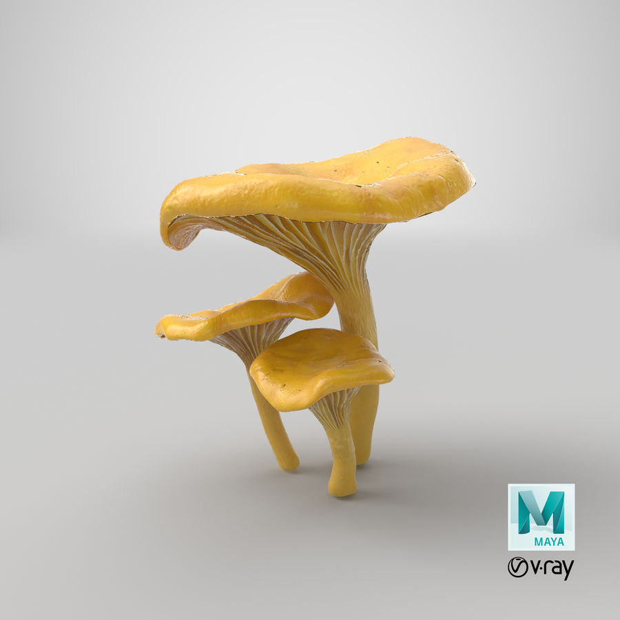 Champignons Chanterelle royalty-free 3d model - Preview no. 32
