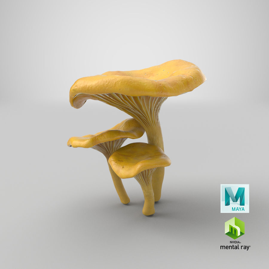 Champignons Chanterelle royalty-free 3d model - Preview no. 33