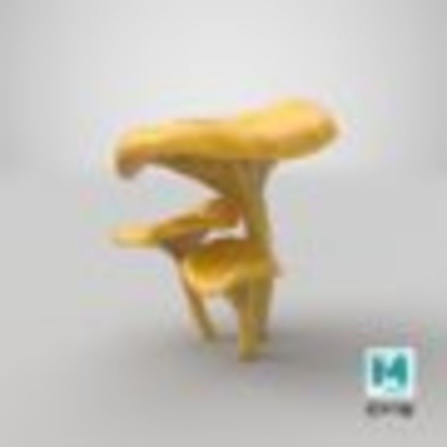 Champignons Chanterelle royalty-free 3d model - Preview no. 31
