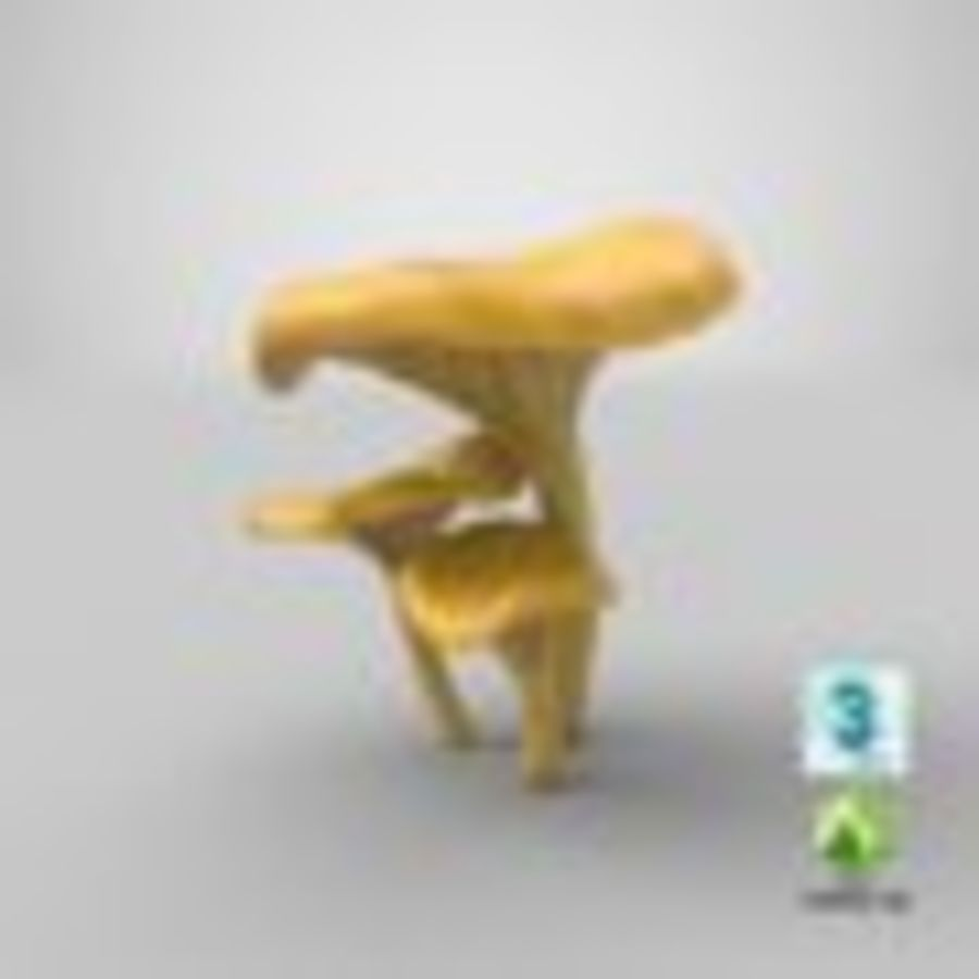 Champignons Chanterelle royalty-free 3d model - Preview no. 35